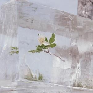 Efterklang - Windflowers